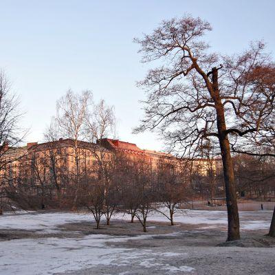 Kevätpäiväntasauksen aamu Hesperian puistossa Helsingissä 20. maaliskuuta 2017.