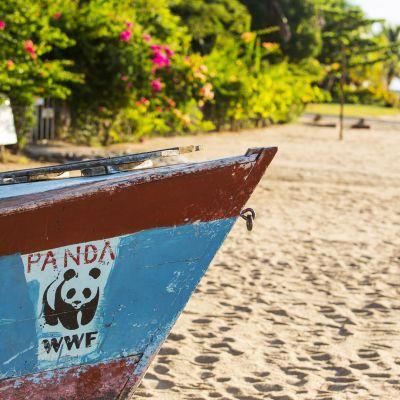WWF:n logo veneen kyljessä.