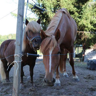Poni ja Hevonen aitauksessa