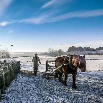 Frank tillsammans med hästen Solveig i ett vintrigt landskap.