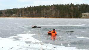 Yträddare är på väg ut över isen till älgtjur som gått genom isen utanför Vessö.