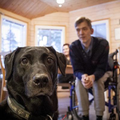 En svart labrador sitter framför en man i rullstol.