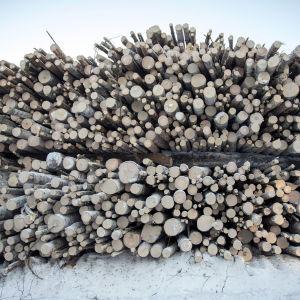 Energiapuuta metsäautotien varressa