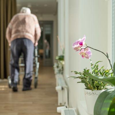Vanhus kävelee käytävällä rollaattorin kanssa Myyrmäen vanhusten keskuksessa.