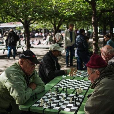 Kuvassa ihmiset pelaavat shakkia tukholmalaisessa puistossa.