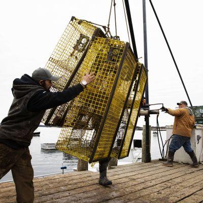 Kuvassa kalastetaan hummereita.
