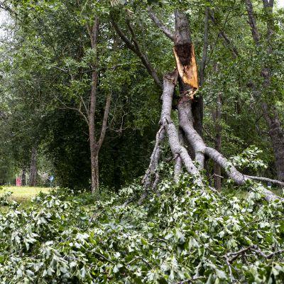 Päivö-myrskyn kaatamia puita Joensuussa.