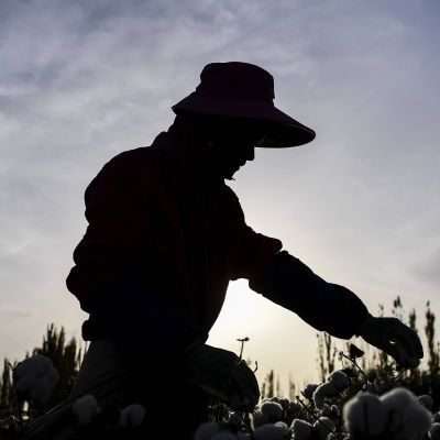 Kuvassa pellolta poimitaan puuvillaa Kiinassa.