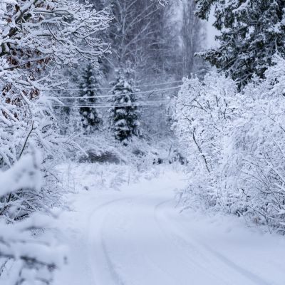 Luminen tie ja metsä sen ympärillä.