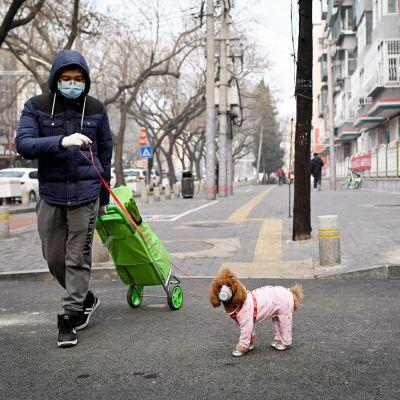 Mies ulkoiluttaa koiraa Pekingissä.