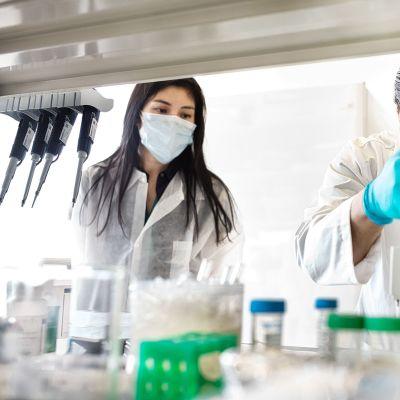 Tutkijat testaavat koronavirusnäytteitä New Yorkissa.