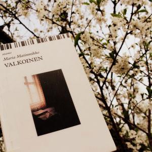 Maria Matinmikon teos Valkoinen takanaan runsaasti kukkivia omenapuita