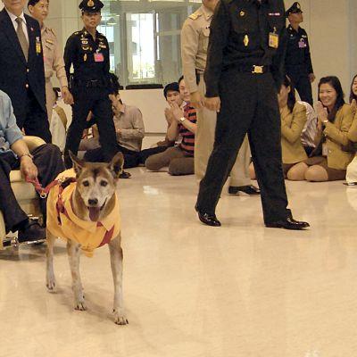 Thaimaan kuningas Bhumibol Adulyadej valokuvattiin vuonna 2013 koiransa kanssa sairaalassa Bankokissa.