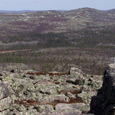 Kevätkesän näkymä Pyhä-Nattaselta koilliseen, Sompion luonnonpuistoa.
