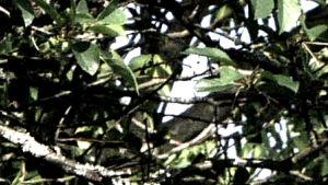 puun oksia