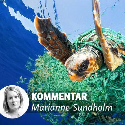 Sköldpadda i havet, intrasslad i plastnät.