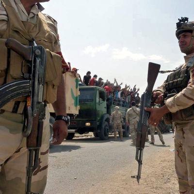 Frivilliga shiamuslimer på väg mot Bagdad