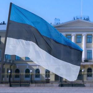 Estlands flagga framför presidentens slott i Helsingfors.