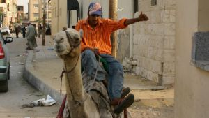 Mies yrittää saada kadulle istuutunutta kamelia liikkelle, Kairo.