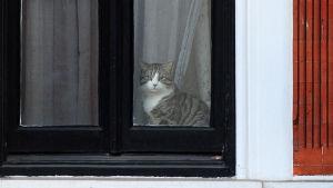 Julian Assanges katt på Ecuadors ambassad i London