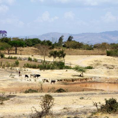 djur vid vattenhål i Machakos