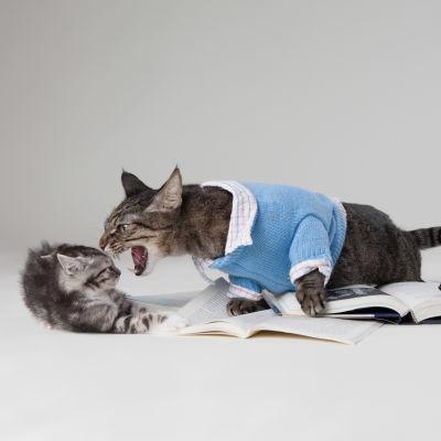 Två katter som grälar. Bilden heter: Max the Brown Tabby and Burt the Grey Kitten: Cat Argument 3