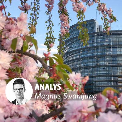 Europaparlamentet med blommor i förgunden.