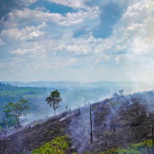 kulotuksen jäljiltä savuava kukkula Parán osavaltiossa Brasiliassa.