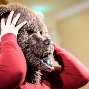 Luciakandidat med björnmask för ansiktet.