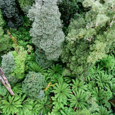 Regnskog i sydöstra Australien.