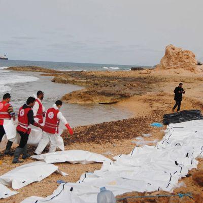 Ruumiita kerätään Libyan rannikolla.