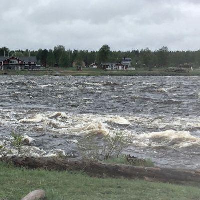 Kukkolankosken vesi tulvakorkeudessa Tornionjoessa.