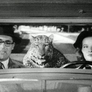 Cary Grant ja Katharine Hepburn elokuvassa Hätä ei lue lakia