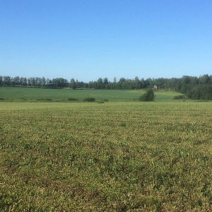 Kesäinen peltomaisema, jonka horisonttia reunustaa lehtimetsä.
