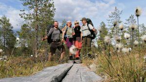 Fyra personer ute på vandring står på en spång längs en vandringsled i Mellersta österbotten