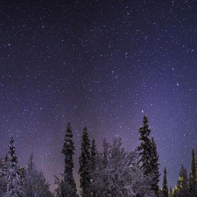 Vinternatt med stjärnor över skog