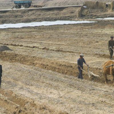 Jordbrukare i Nordkorea
