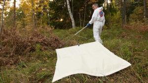 Reima Kutila drar ett vitt lakan efter sig i skogen i hopp om att fånga fästingar med det.