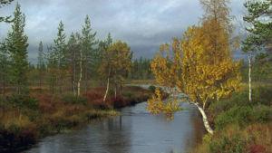 Tenojoki syksyllä