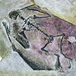 Det fanns över 20 miljoner objekt i museet, bland dem dinosauriefossiler som har hittats i Sydamerika