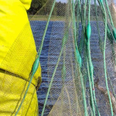 Pieniä kaloja koekalastusverkossa.