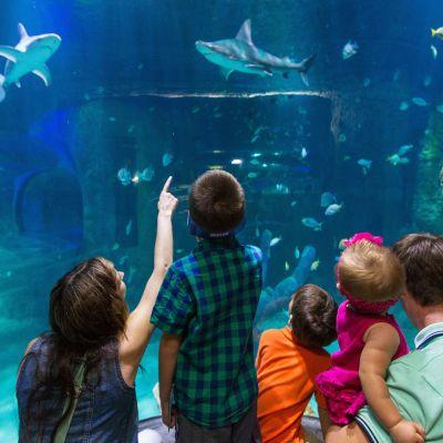 Ihmiset katselevat kaloja merimaailmassa lasiseinän takaa.