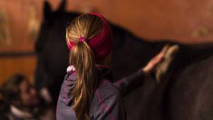 Muusa harjaa hevosta