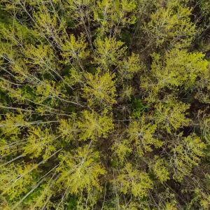 puita ylhäältä päin kuvattuna.