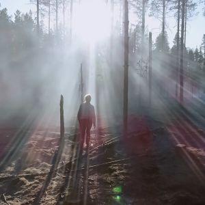 Palanut metsä.