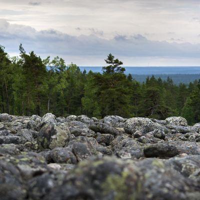 Suuri muinainen merenrantakivikko Kristiinankaupungin Pyhävuorella.