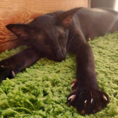 Musta kissa makaa aurinkoisella parvekkeella