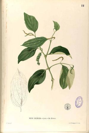 Pippurikasvi, kasvitaulu
