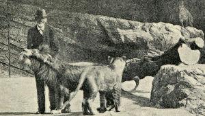 Carl Hagenbeck på Hagenbeck Zoo.