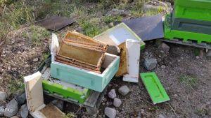Palasiksi rikottu mehiläispesä maassa.